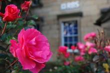 透明な心の世界へ-催眠療法士(ヒプノセラピー)・鹿島光洋のメッセージ-英国 ピンクの花