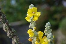 透明な心の世界へ-催眠療法士(ヒプノセラピー)・鹿島光洋のメッセージ-英国 黄色い花