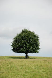 透明な心の世界へ-催眠療法士(ヒプノセラピー)・鹿島光洋のメッセージ-英国 一人ぼっちの木