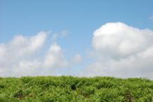 透明な心の世界へ-催眠療法士(ヒプノセラピー)・鹿島光洋のメッセージ-英国 草原